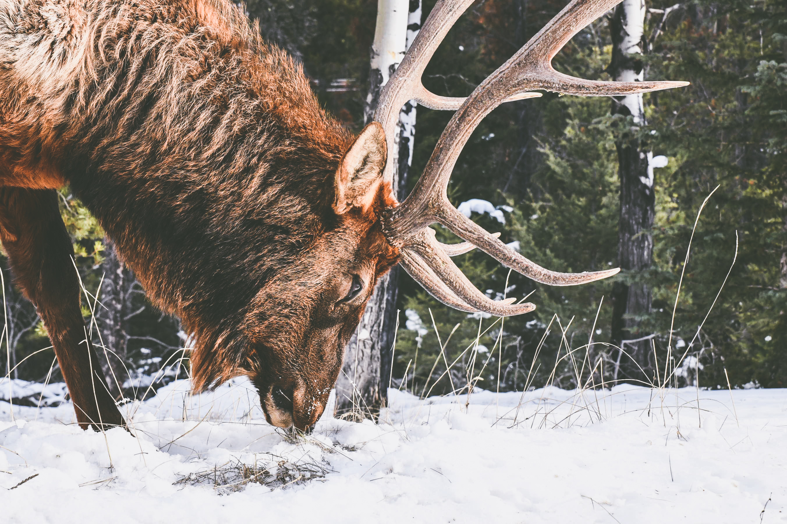 les rocheuses hiver