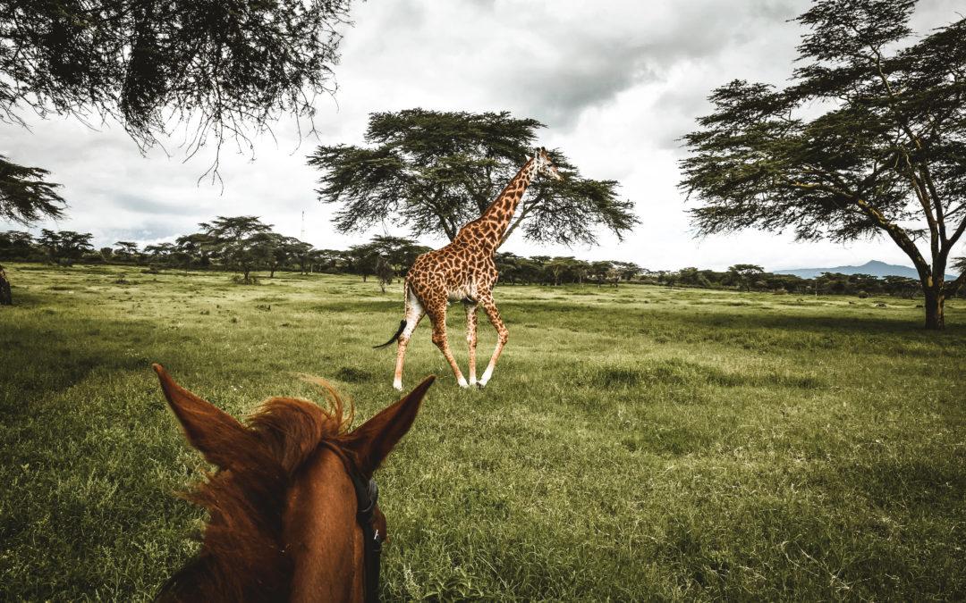 15 jours au Kenya | Récit, itinéraire & conseils 🇰🇪