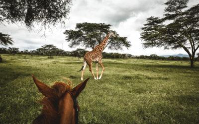 Le Kenya | Voyage solo et mon premier safari