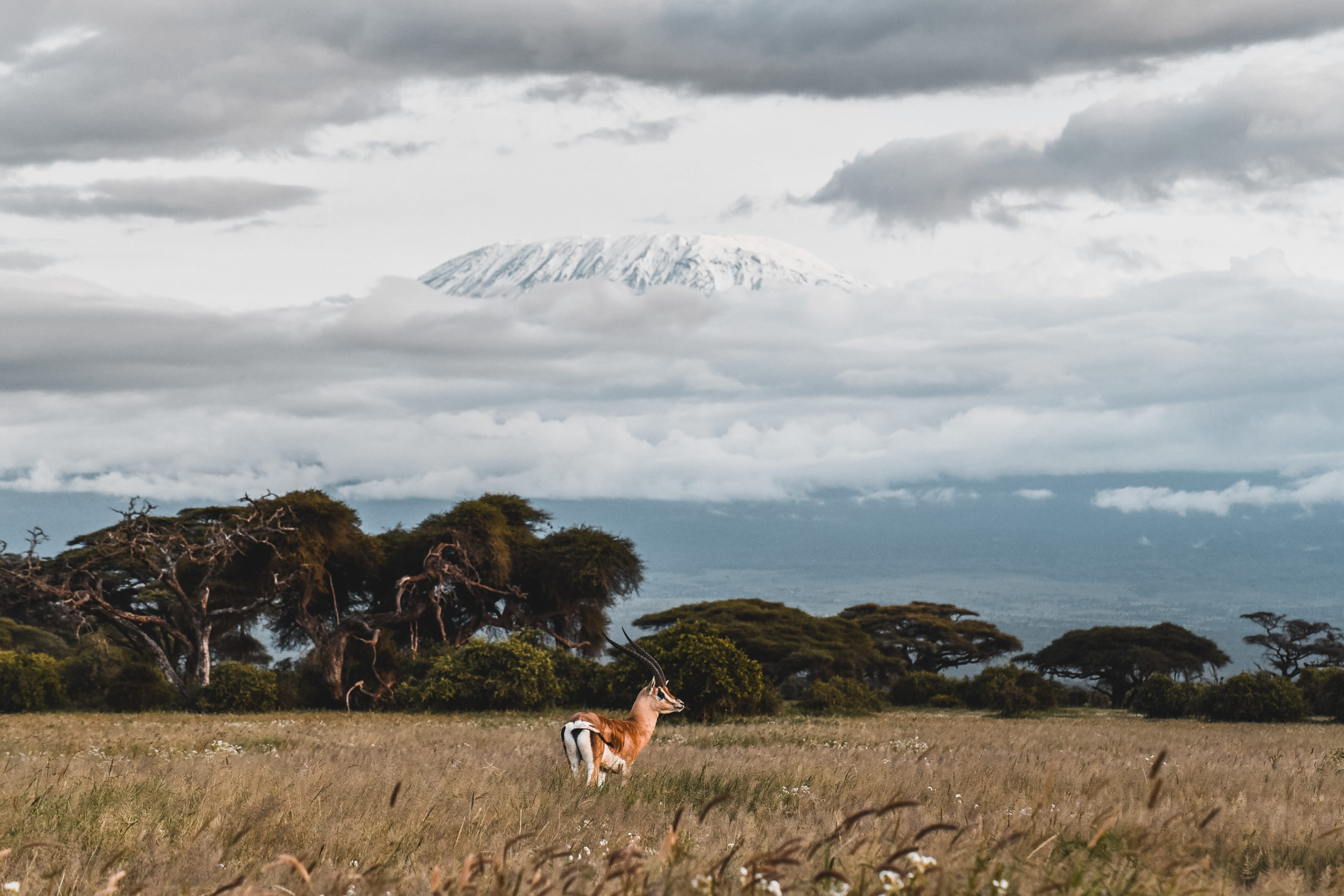 safari amboseli kenya