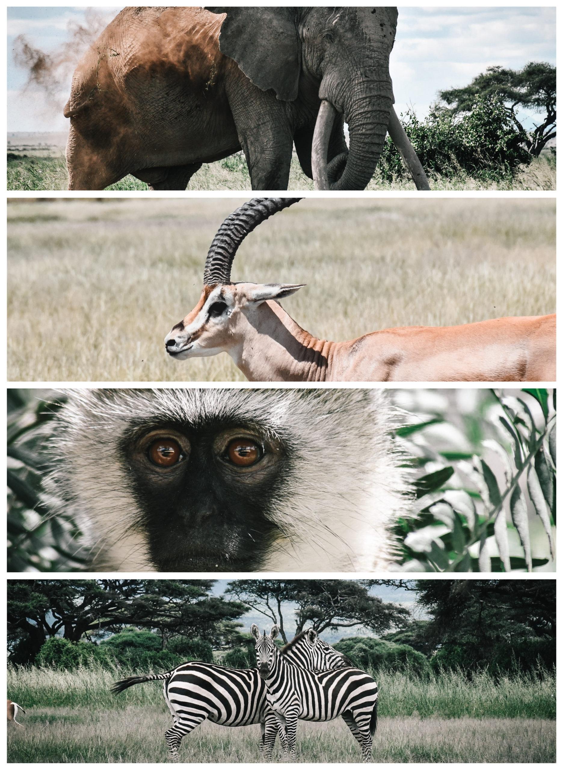 amboseli safari kenya safari