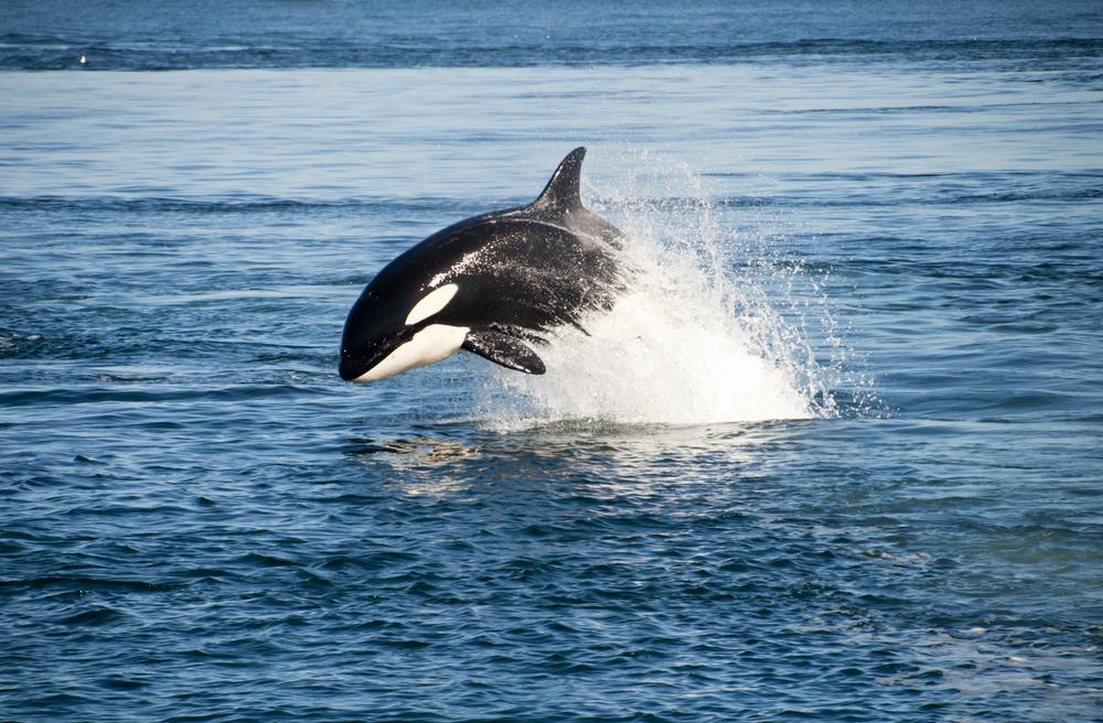 L'important mouvement We Are The Orca