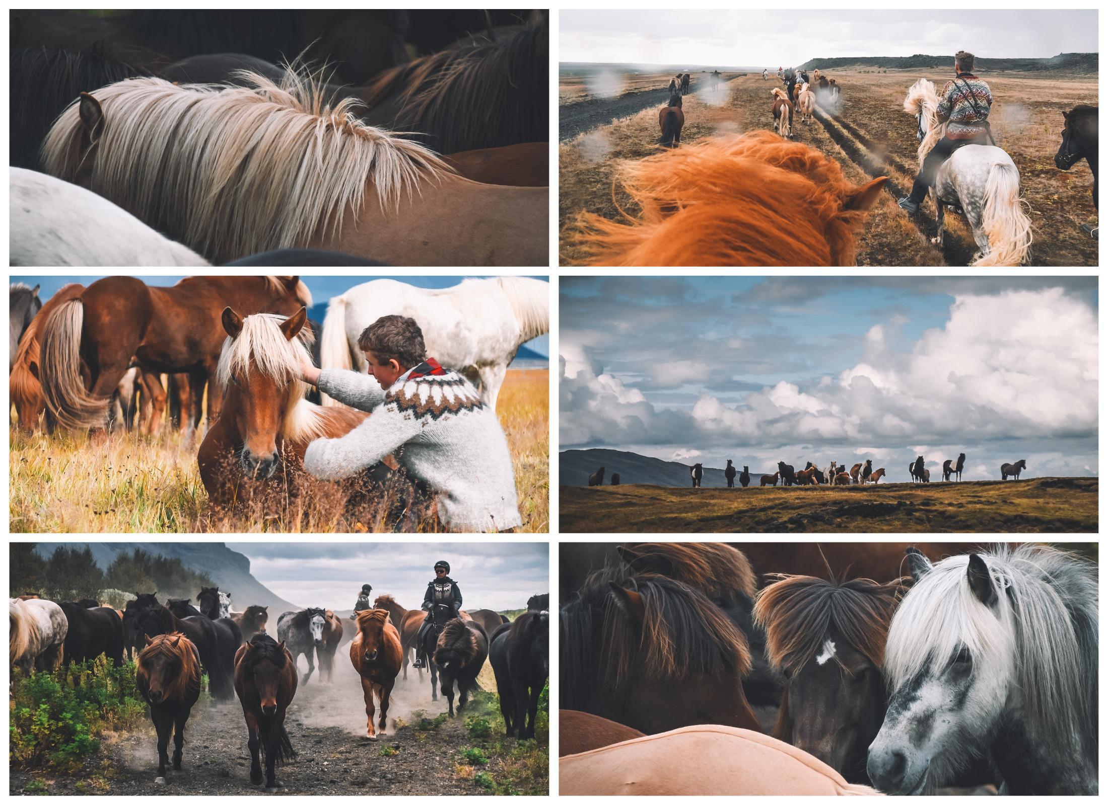 islande à cheval