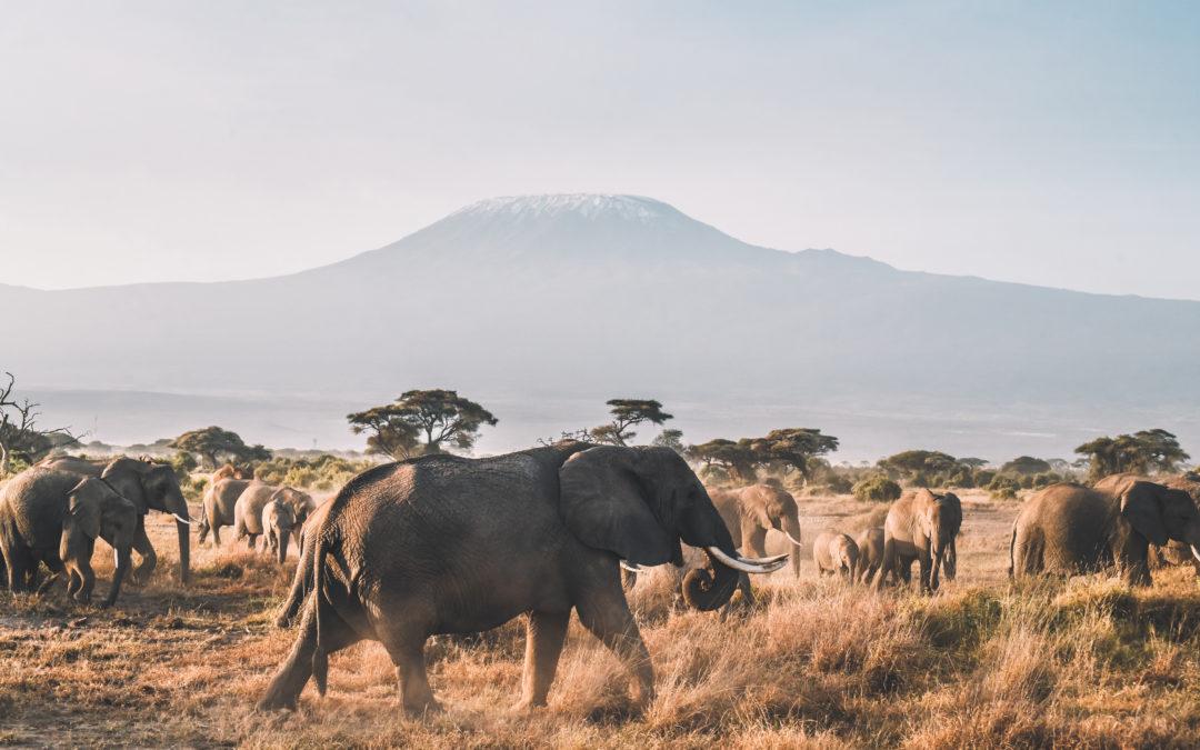Préparer son voyage et son safari en Tanzanie