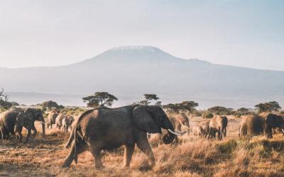 Préparer son voyage et son safari en Tanzanie | Le guide pratique et complet