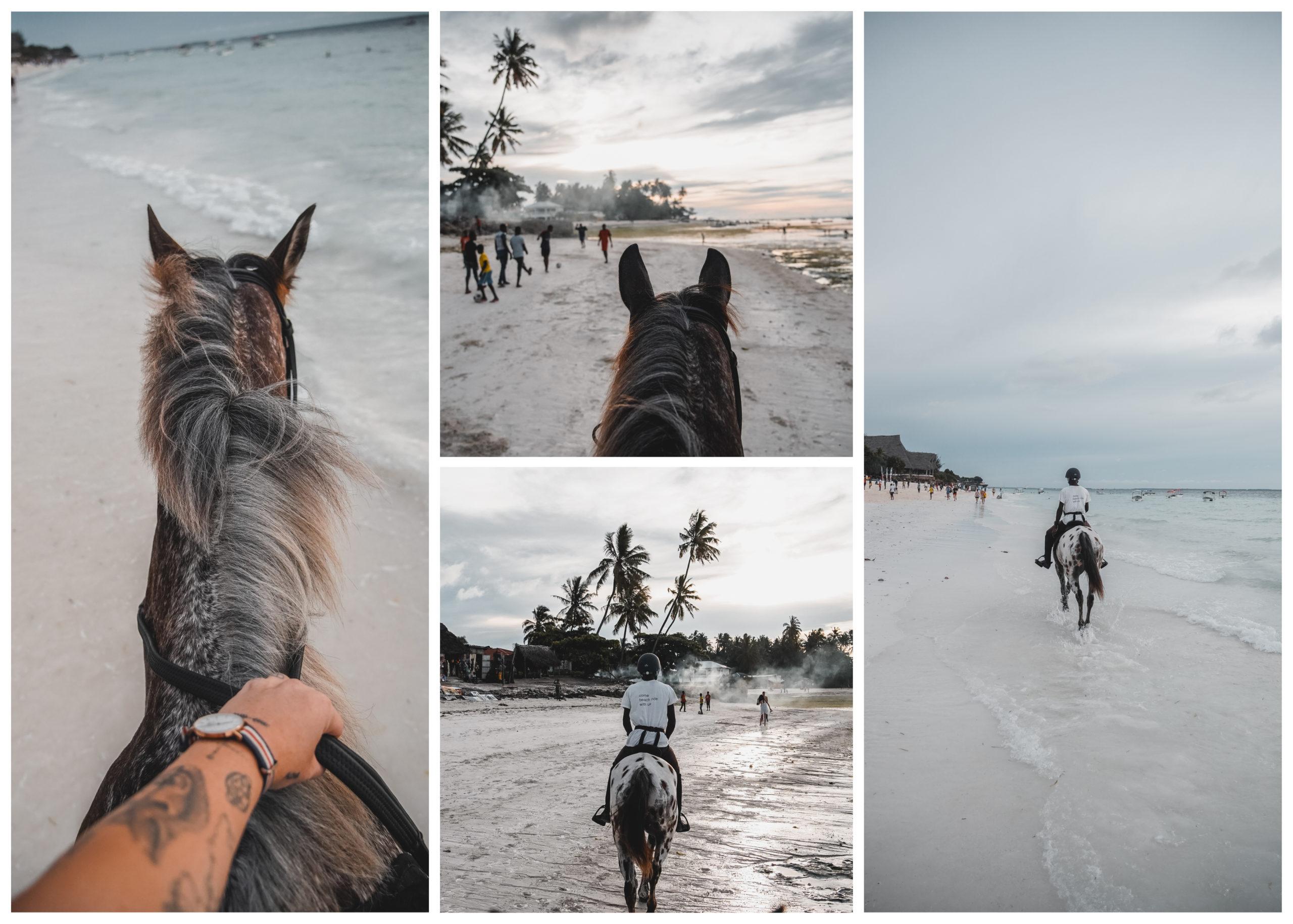 zanzibar horse cheval