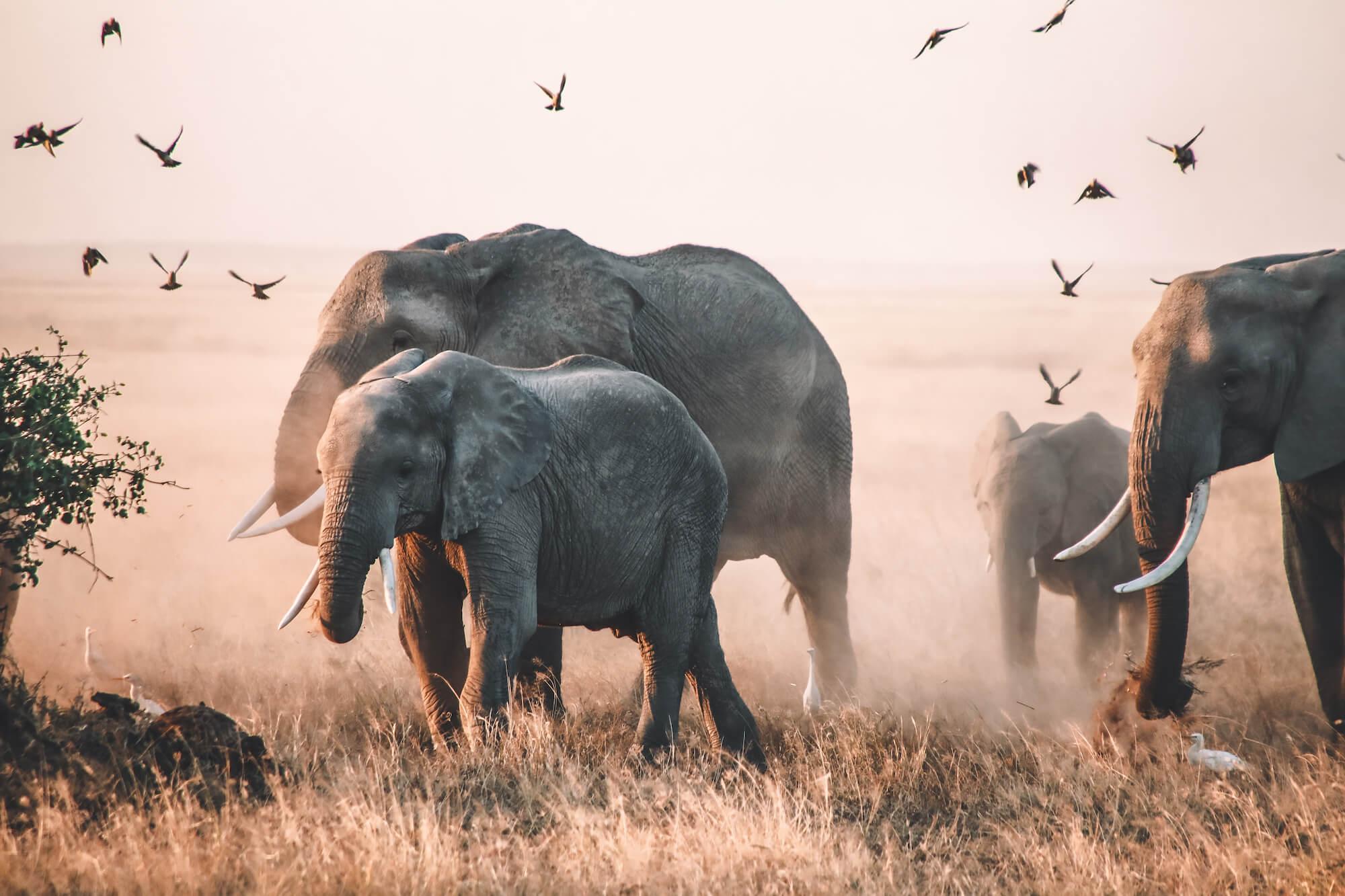 plus beau safari kenya amboseli