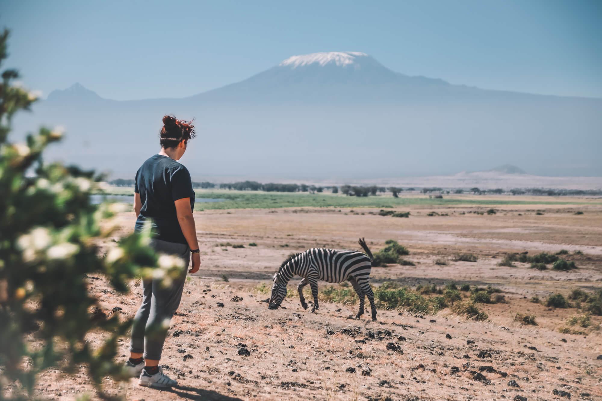 kilimandjaro zèbre safari pied