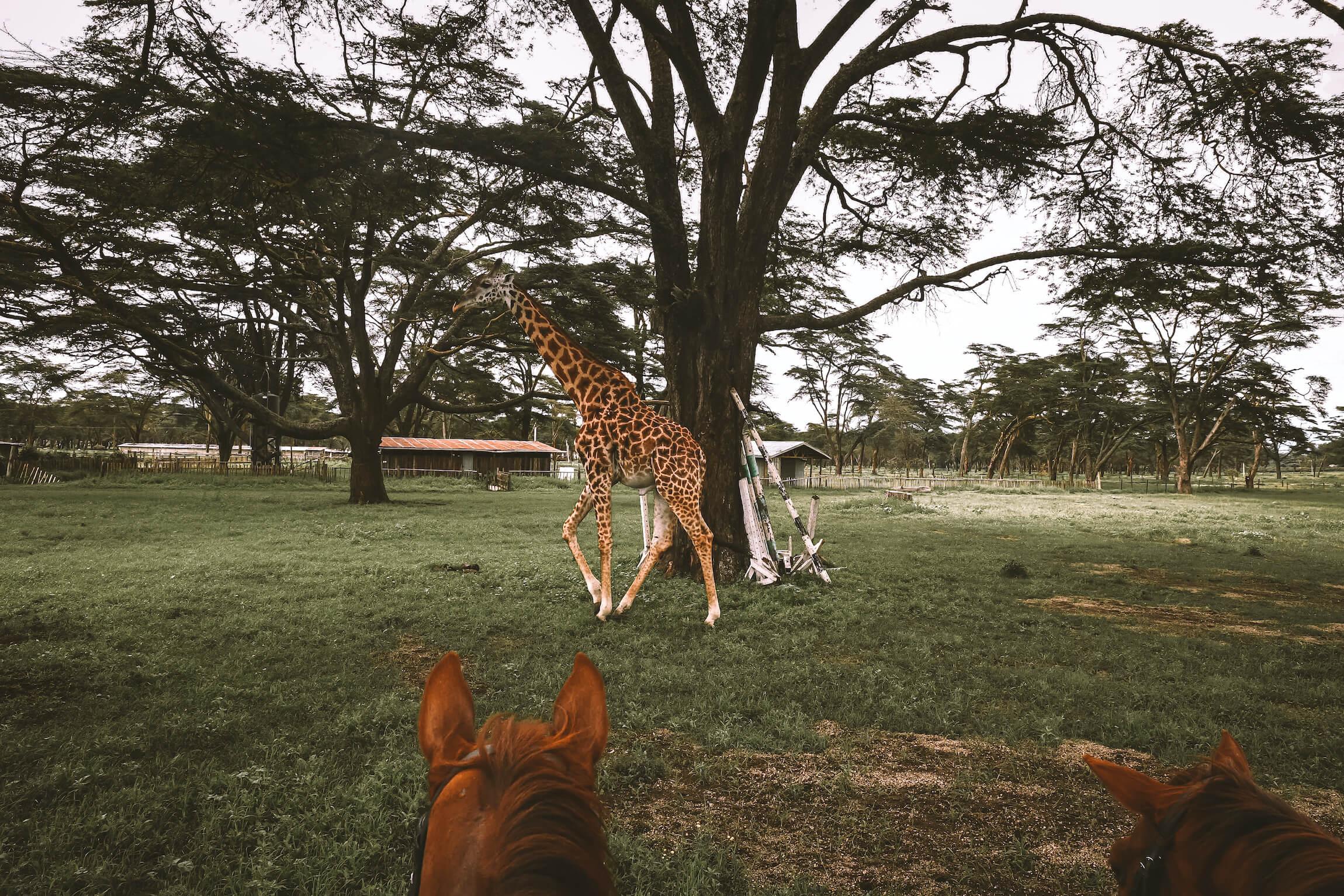 safari naivasha kenya