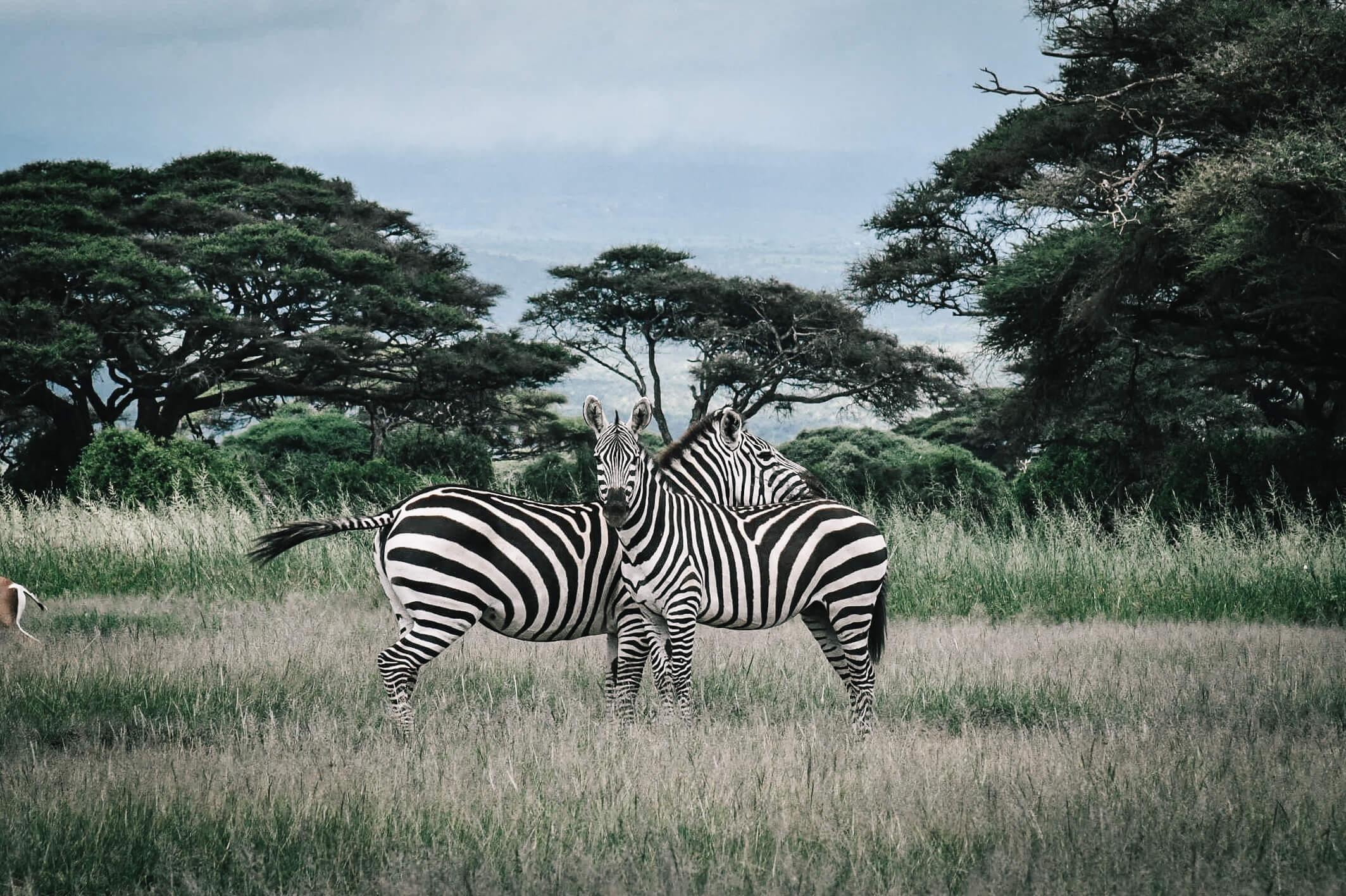 safari masai mara kenya