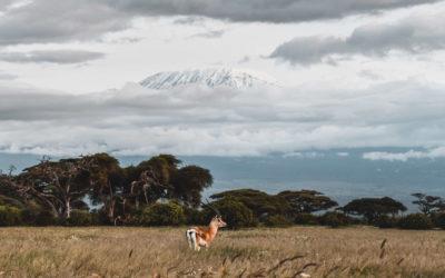 Comment préparer un voyage et un safari au Kenya ?
