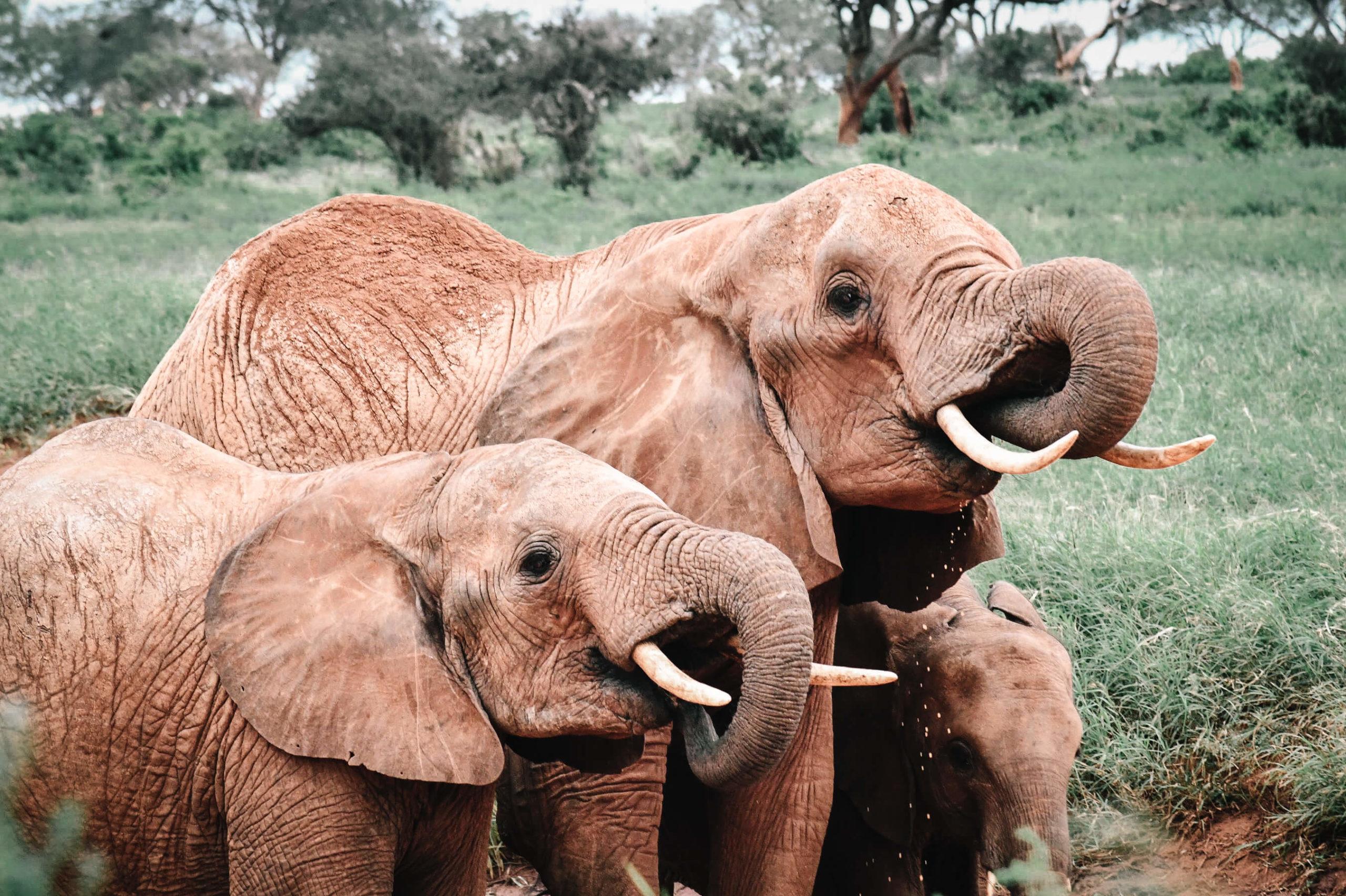 elephants kenya safari